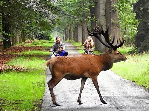 """Veluwe fiets-4daagse Otterlo @ Boerderij """"De Waldhoorn"""""""